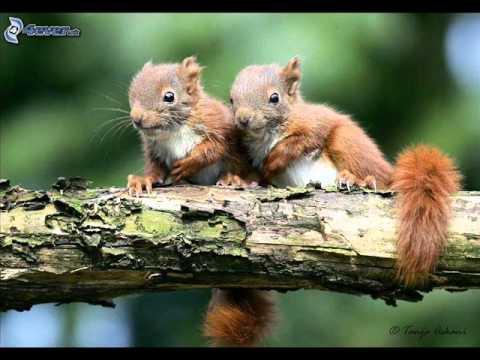 Dve šibnuté veveričky