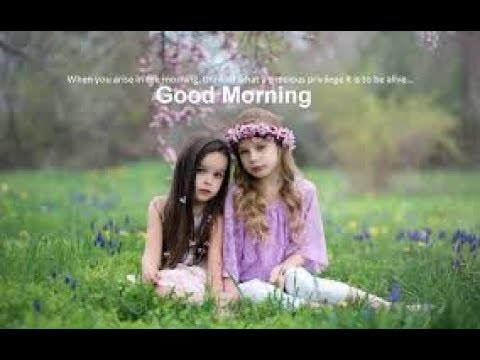 Happiness quotes - Good morning wishes   status video