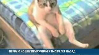 Люди и кошки. Комедия положений
