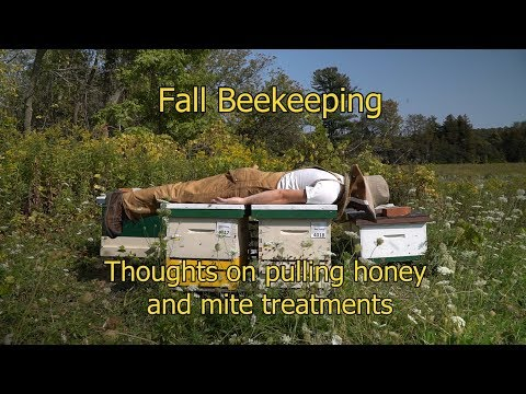 Fall Beekeeping Preparing For Winter Part 1