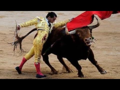 New  F @ Llece The Bullfighter Ivan Fandiño After Suffering A Goring In The Side - US General News
