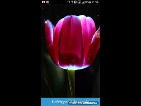Imagens de papel de parede - Papel de Parede Animado Flor Android