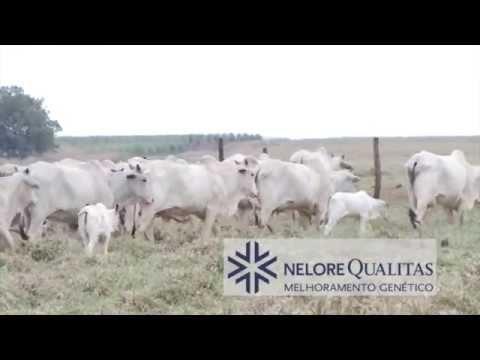 Campo Rações e Minerais - Resultado em Campo - Fazenda Rancho Alegre - AgroPontieri
