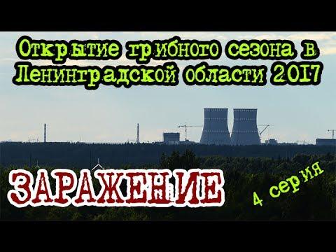 Грибы ленинградской области 2017 июль