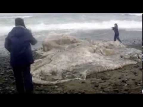 dragon - It seems the paranormal is becoming the new normal. Compilation here of mysterious monsters and some STARTLING footage of actual