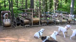 You've Never Seen Anything Like This: Dog Gym