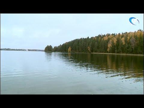 В Валдайское озеро выпустили несколько тысяч мальков рыб