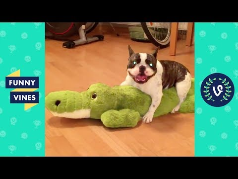 TRY NOT TO LAUGH - FUNNY ANIMALS Compilation | Cute Dogs & Cats | Funny Vines June 2018 (видео)