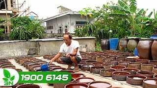 Nông nghiệp | Về Nam Định thăm làng nghề nước mắm Sa Châu