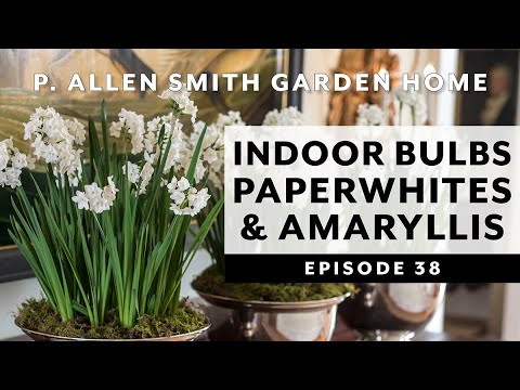 Forcing Bulbs to Bloom Indoors   Paperwhites & Amaryllis: P. Allen Smith