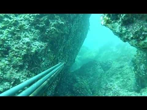 Pesca Sub -DENTICIONE-....10 KG!!!