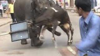 Kota India  City pictures : Gajah Liar Ngamuk Di Pusat Kota India