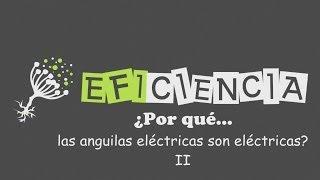 PDF del vídeo: http://www.mediafire.com/view/e7y26138jy993y7/PQ.012.13.las_anguilas_electricas_son_electricas.pdf GENERAR ELECTRICIDAD. ANGUILAS ELÉCTRICAS Y...