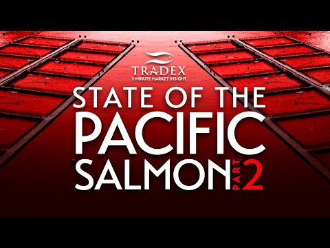 """3MMI - STATE OF THE PACIFIC SALMON (Part 2) - The """"Smoking Gun"""" Killing Pacific Salmon, DFO Keeping Science Away from Fisheries Minister"""
