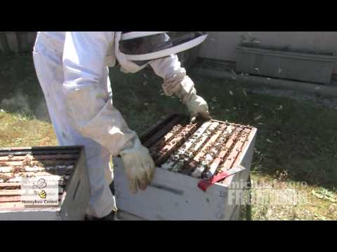Canadian Bee Hive At Honeybee Centre 2 of 2 – Michael Fromberg