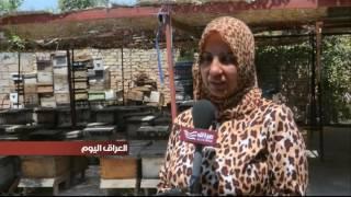 بالفديو .. أم أحمد .. من إمرأة مهجرة الى سيدة أعمال في انتاج وتسويق العسل في بابل