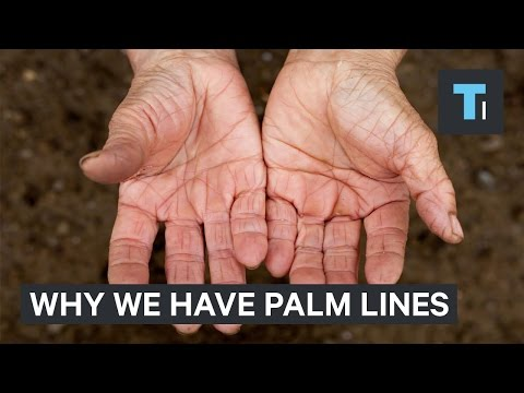 Why Do You Have Lines on Your Palms?