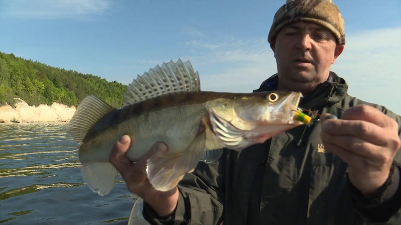 рыбалка на мандулу на судака