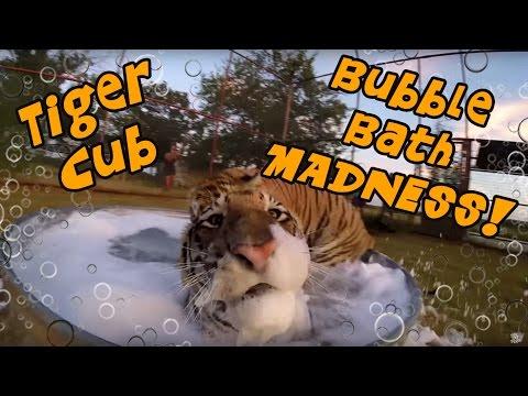 這兩隻小老虎難得體驗到人類泡泡浴的樂趣,牠們High翻天的可愛模樣也把大家萌到差點暈倒了!