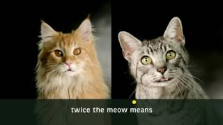 Nonton Meow Mix Commercial Film Subtitle Indonesia Streaming Movie Download
