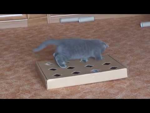 Как сделать игрушки для котов своими руками