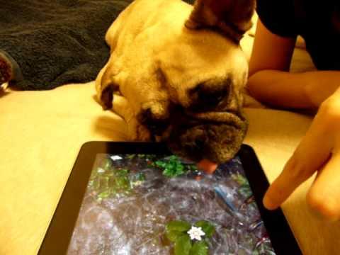 Trollando o cão com um tablet