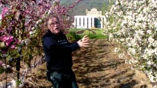 #334 Wie schütze ich Apfelblüten vor Frost