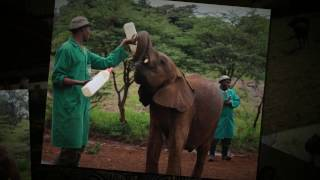 Kenya: The Highlights Video