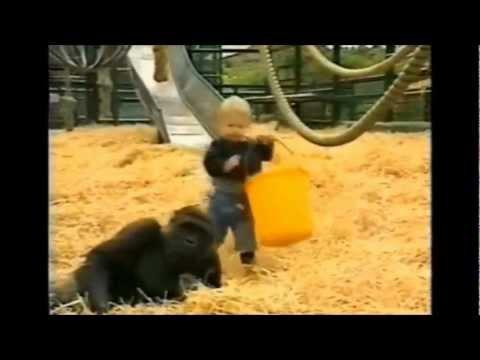 Un gorila como compa�ero de juegos