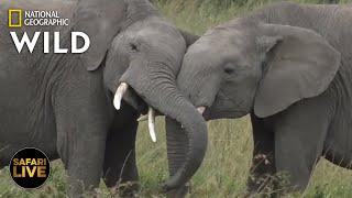 Safari Live - Day 330   Nat Geo Wild by Nat Geo WILD