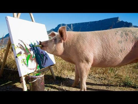The Rescued Pig Who Became an Artist