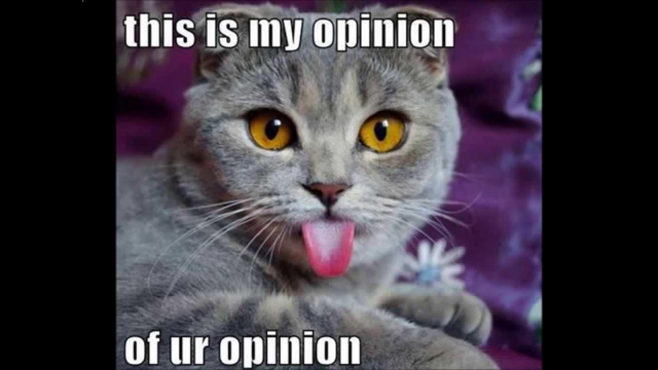 Best of Funny Cat Memes 2015