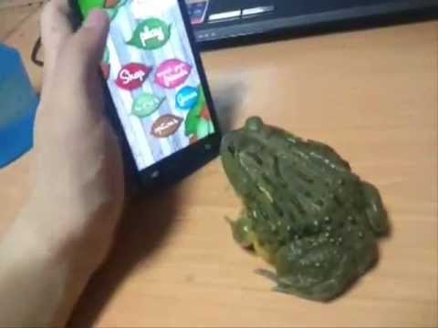 piss - Pissing off a Frog with a smartphone.. Ends in loosing fingers.