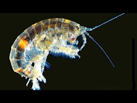 10 Horrifying Parasites That Might Be Living Inside
