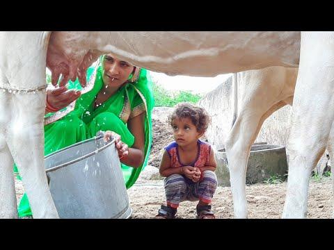 Cow Milking | Village Life Vlog
