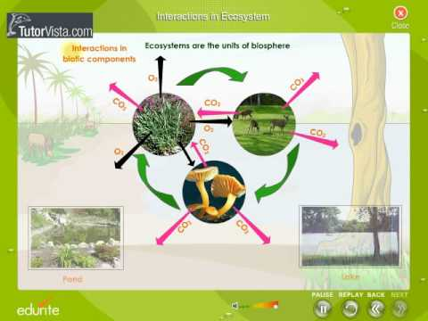 Interaction In Ecosystem