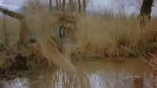 Video Šelmy kočkovité- Biologie MP3, 3GP, MP4, WEBM, AVI, FLV Agustus 2017
