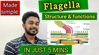 Flagella (structure & Functions),explained in 5 min!!!!!