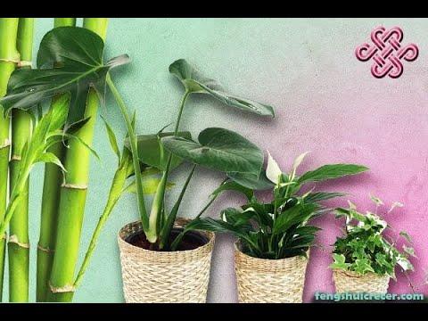 Feng Shui de las plantas: El cactus elimina las malas energías y