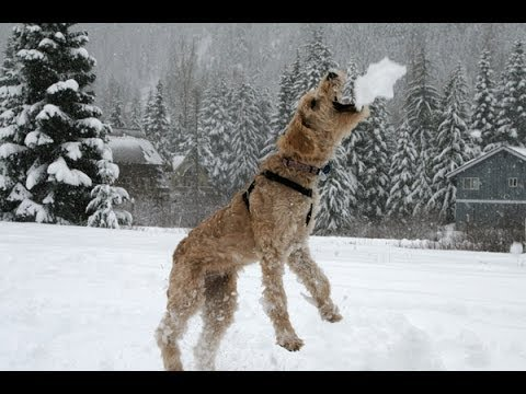 WATCH: Dogs eating snow