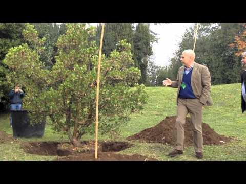 Una nuova pianta a Ville Ponti