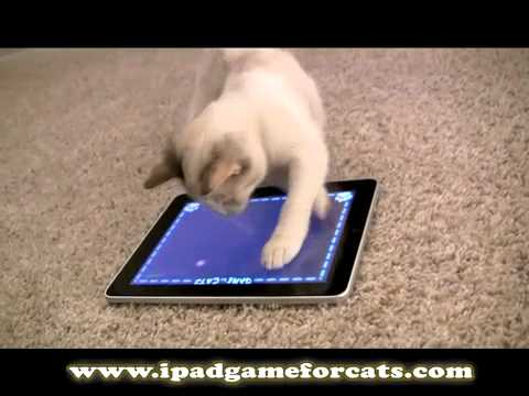 iPad Game for Cats: The World&#8217;s Greatest Video Game (for cats, not humans)
