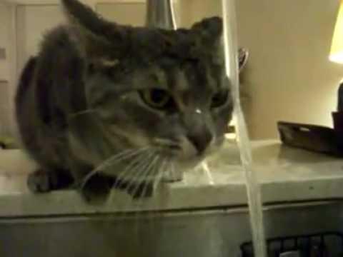 il gatto che non teme l'acqua