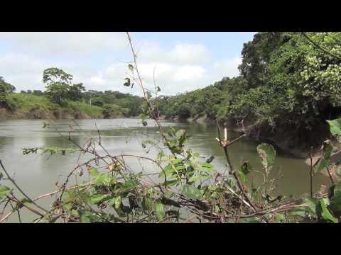 La Biodiversidad y la Soberanía Alimentaria bajo Amenaza