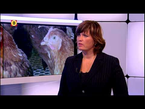 Vastgestelde vogelgriep gevaarlijk voor mensen