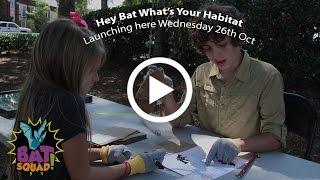 Bat Squad - Ep.2 - Your Habitat