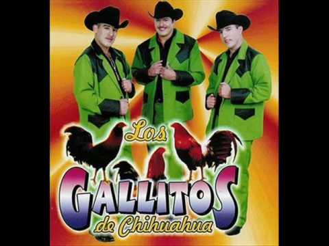 Los Gallitos de Chihuahua – O ME VOY O TE VAS