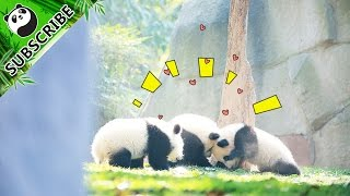 【Panda Moments】 tells the daily story of pandas by catching moments of pandas' life through camera lens. Hopefully it is...