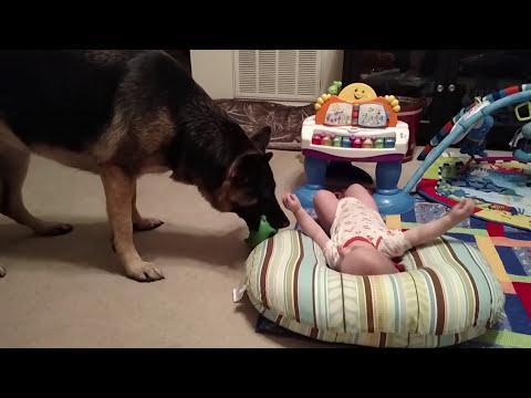 她聽到房間裡的寶寶不斷大笑時非常好奇,結果進去查看才發現愛犬偷偷在對寶寶做這件事…