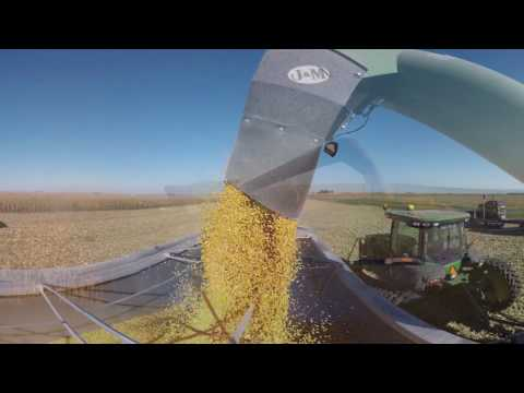 Illinois HomeGrown Corn Video 1
